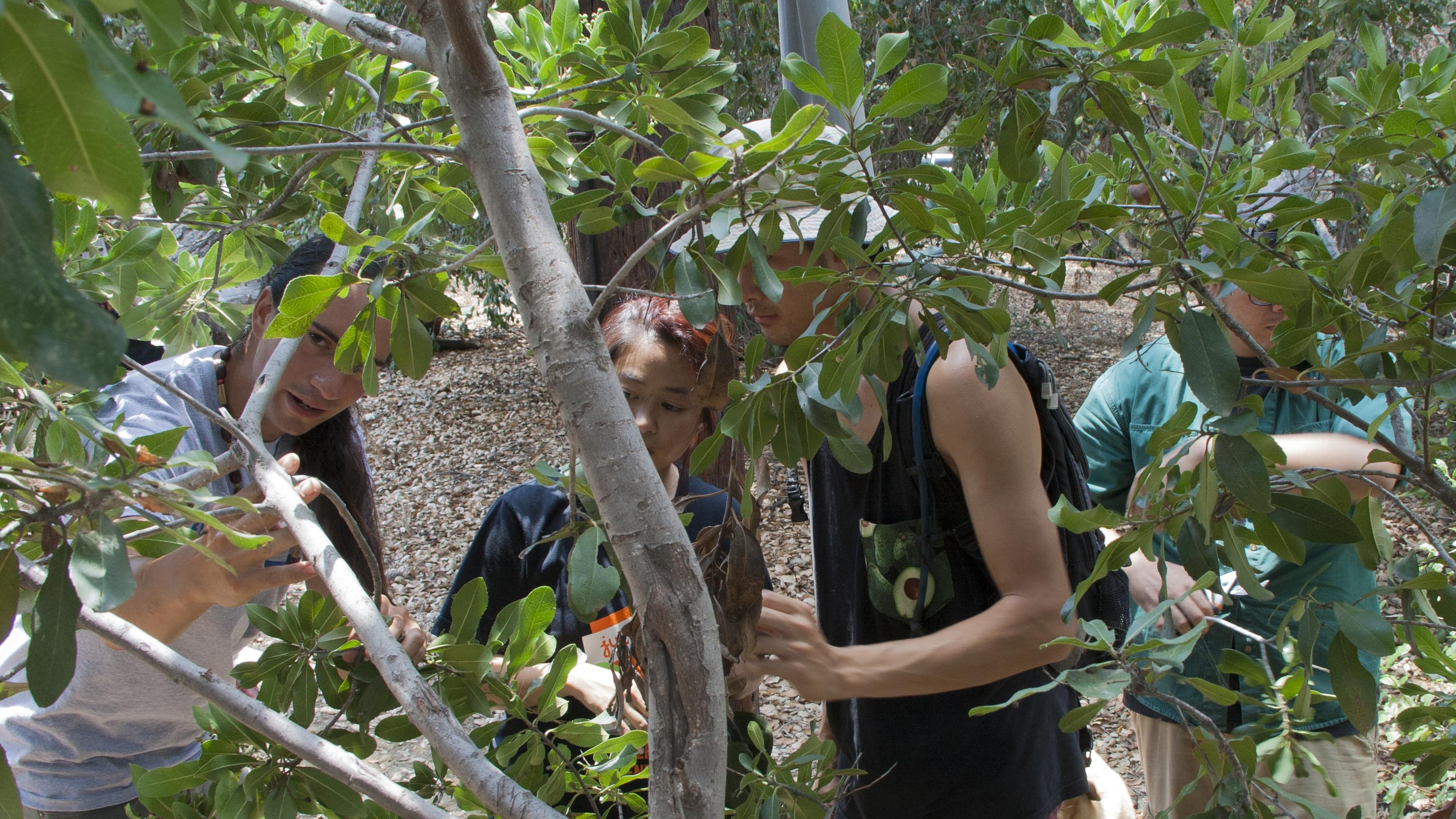 Volunteers Learn How to Take Toyon Cuttings