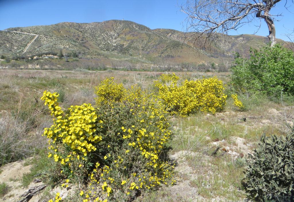 Petersen Ranch Leona Valley